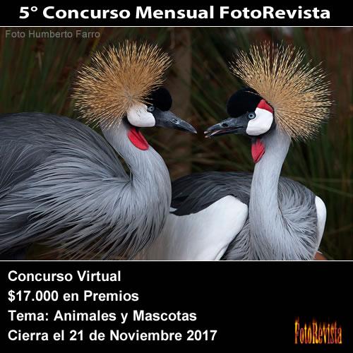5° Concurso Mensual FotoRevista