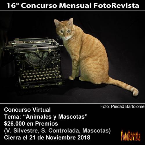16° Concurso Mensual FotoRevista