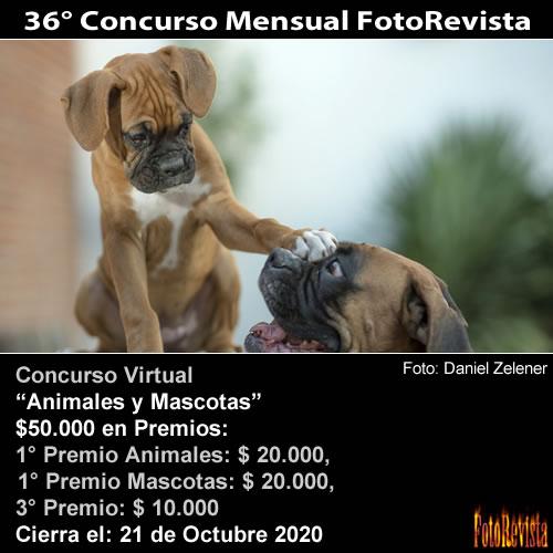 36° Concurso Mensual FotoRevista