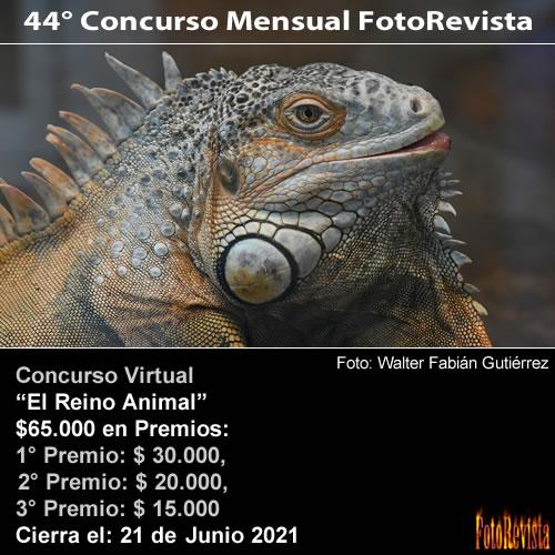 44° Concurso Mensual FotoRevista