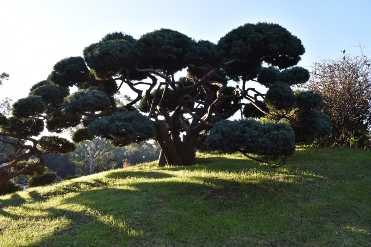 Fotorevista sencillamente fotos jard n japones rbol for Arboles jardin japones